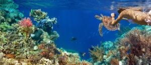 bahamas_charter_snorkeling
